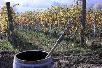 I vini naturali di Andrea Tirelli